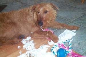 Skye and the TP